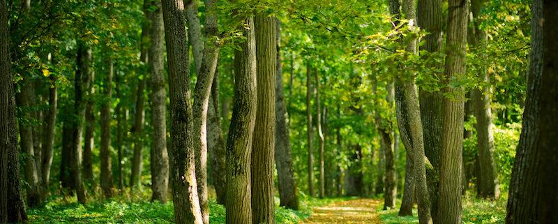 Bois et forêts, un patrimoine à valoriser (La lettre du Notaire N°88) Office Notarial MARIE-SUTTER Ville-d'Avray 92410