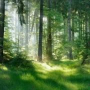 Modalités de transmission et fiscalité pour les propriétaires de forêts en France (La lettre du Notaire N°110) - La lettre des Notaires de France Mars 2020 - Notaire Ville-d'Avray 92410 - Office Notarial Maître Delphine MARIE-SUTTER